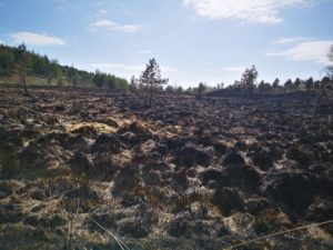 Picture of land burnt because of wildfires