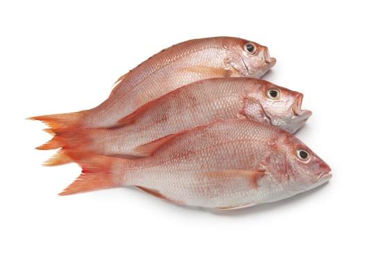 Exotic_Fish
