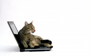 Cat_and_laptop
