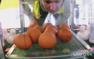UKFast Chicks Main
