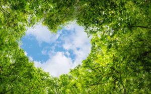 Sustainability and the cloud